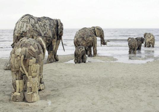 elephants on beach